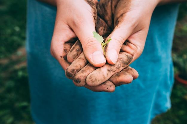 Concetto del frutteto con le mani che tengono poca pianta