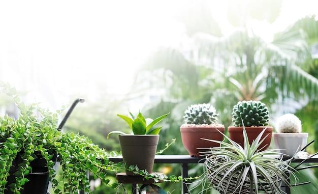 Concetto del giardino e della casa della decorazione della pianta e dell'albero al balcone con lo spazio della copia
