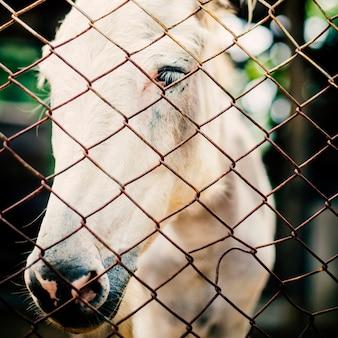 Concetto dell'azienda agricola animale della razza dell'equino del ranch del cavallo