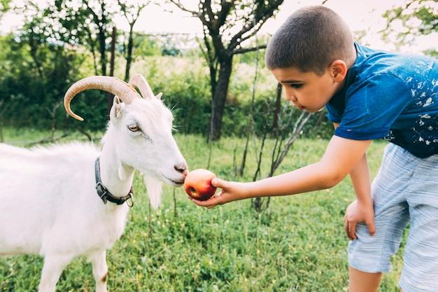 Concetto dell'azienda agricola con la capra d'alimentazione del ragazzo