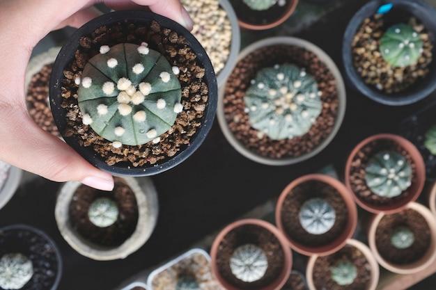 Concetto della natura della pianta da appartamento del cactus della pianta