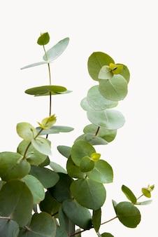 Concetto della pianta verde del primo piano