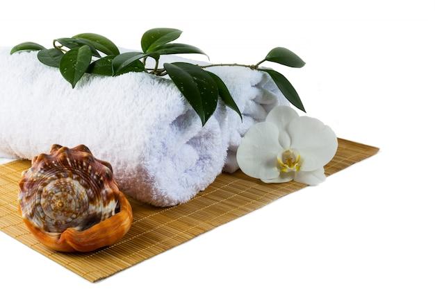 Concetto della stazione termale con la conchiglia isolata su bianco