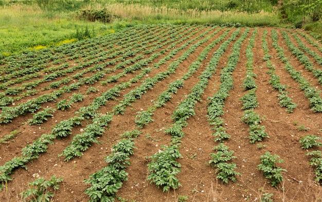 Concetto di agricoltura ad alto angolo con piante