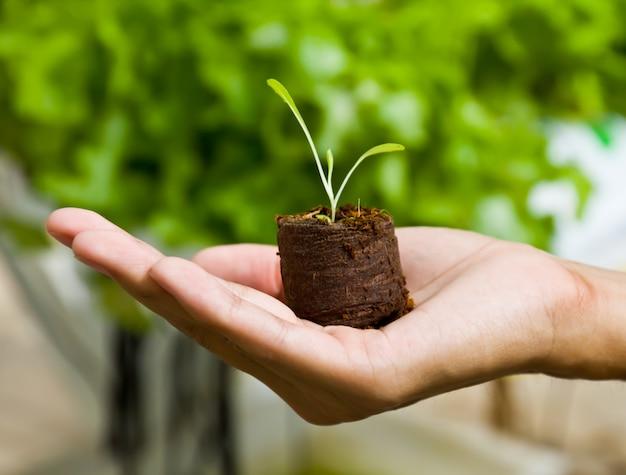 Concetto di agricoltura germoglio braccio primo piano
