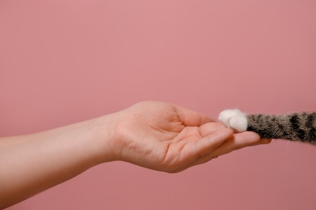 Concetto di amicizia della zampa della mano e del gatto