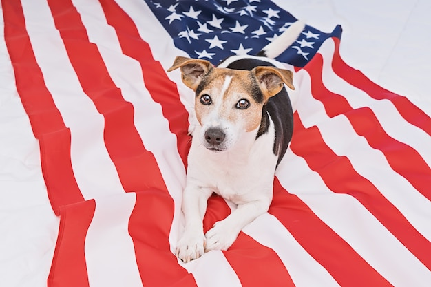 Concetto di celebrazione di giorno della bandiera americana
