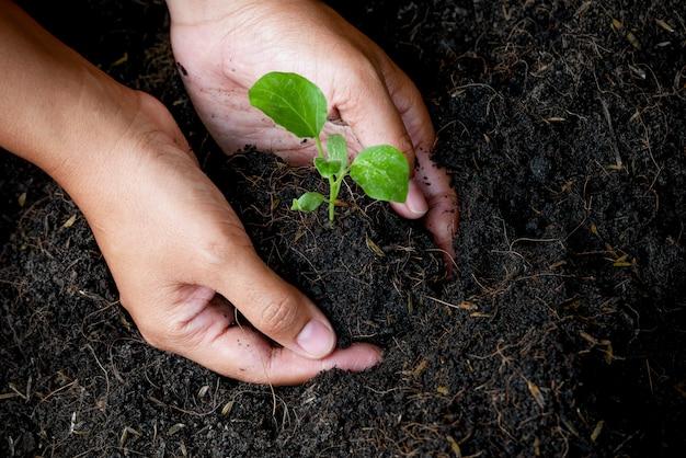 Concetto di crescita, le mani stanno piantando le piantine nel terreno