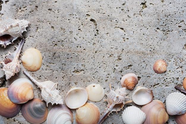 Concetto di estate. conchiglie sullo sfondo di marmo chiaro. vista dall'alto verso il basso con spazio di copia per il testo