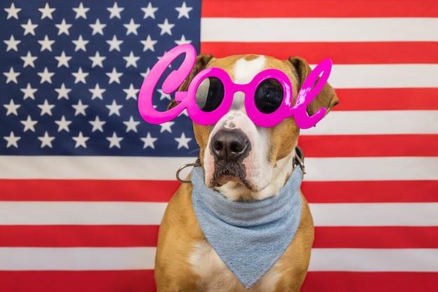 Concetto di festa dell'indipendenza americana, con il cane staffordshire terrier e bandiera a stelle e strisce