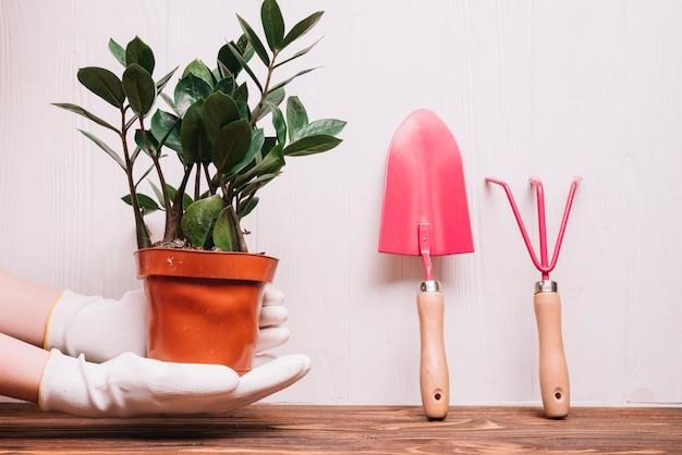Concetto di giardinaggio con le piante