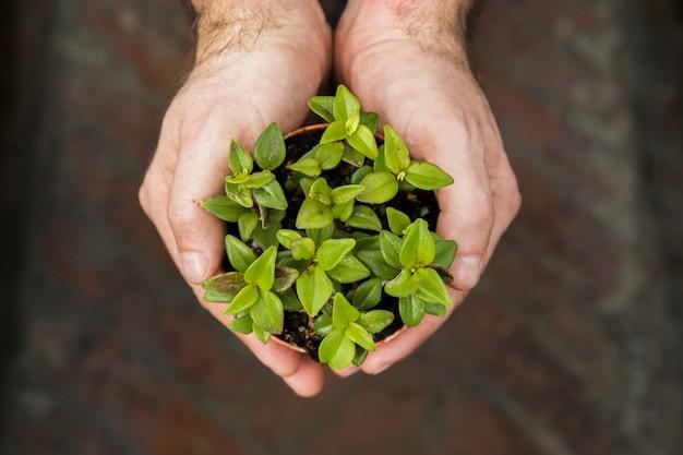 Concetto di giardinaggio con mani femminili