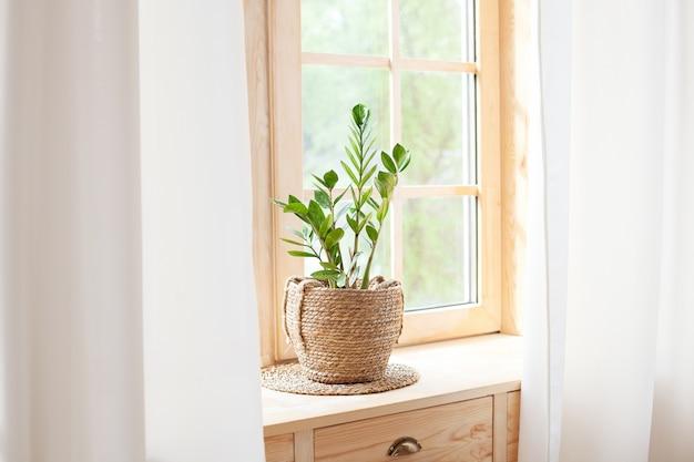 Concetto di giardinaggio domestico. zamioculcas in vaso di fiori sul davanzale. piante domestiche sul davanzale della finestra. piante domestiche verdi in un vaso sul davanzale a casa. hygge. boho. rustico. scandinavo. spazio per il testo