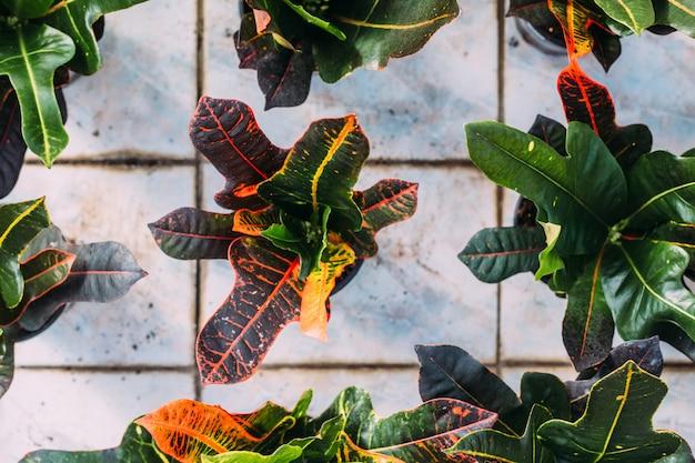 Concetto di giardinaggio, impianto e flora - close up della pianta in vaso a serra. vista dall'alto