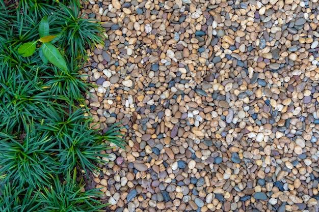 Concetto di giardinaggio, piccoli ciottoli con pianta verde decorata in giardino per il percorso a piedi.