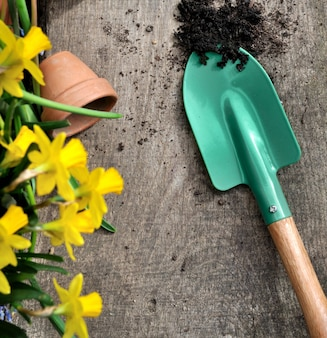 Concetto di giardinaggio primavera