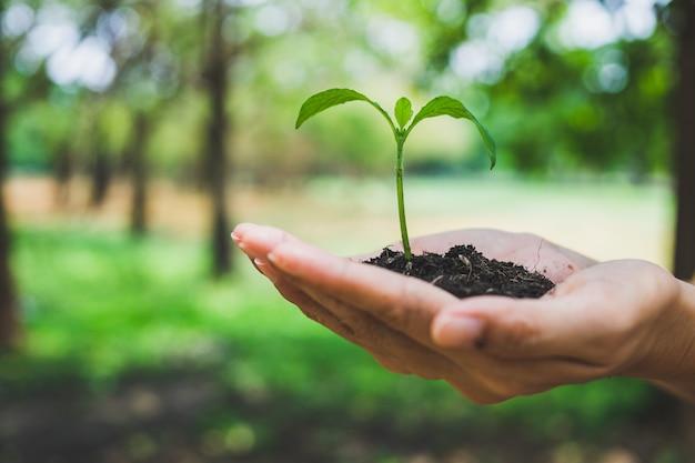 Concetto di giornata mondiale dell'ambiente. mano che tiene pianta.