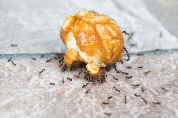 Concetto di lavoro di squadra, formiche che mangiano zucchero dal caramello di popcorn.