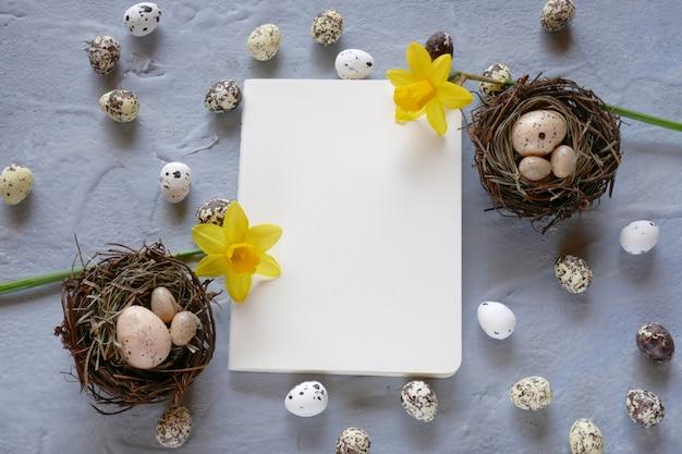 Concetto di pasqua le uova di quaglia decorative di pasqua e i narcisi gialli fioriscono su una vista superiore del fondo grigio, spazio della copia.