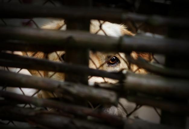 Concetto di problema sociale di maltrattamento di animali con cane triste dietro un recinto
