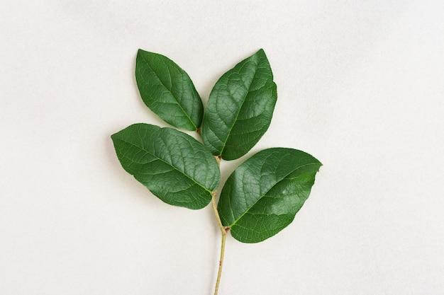 Concetto di protezione dell'ambiente con piccola pianta, ramo naturale dell'albero con le foglie verdi. amore per il fondo della natura con lo spazio della copia.
