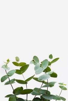 Concetto naturale delle foglie del primo piano con lo spazio della copia