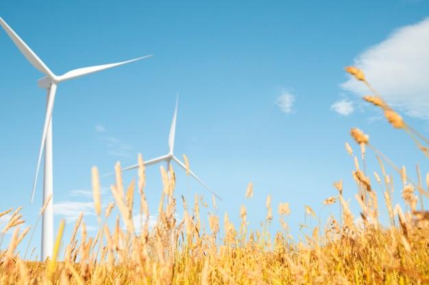 Concetto naturale di scenari della collina del campo del pascolo del mulino a vento