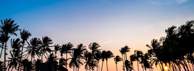 Concetto panoramico di estate del fondo dell'insegna dell'albero del cocco con il fondo del cielo di tramonto, il concetto della natura di concetto del fondo dell'insegna della copertura e l'estate di viaggio
