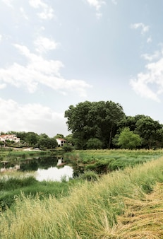 Concetto rurale con bellissimi alberi