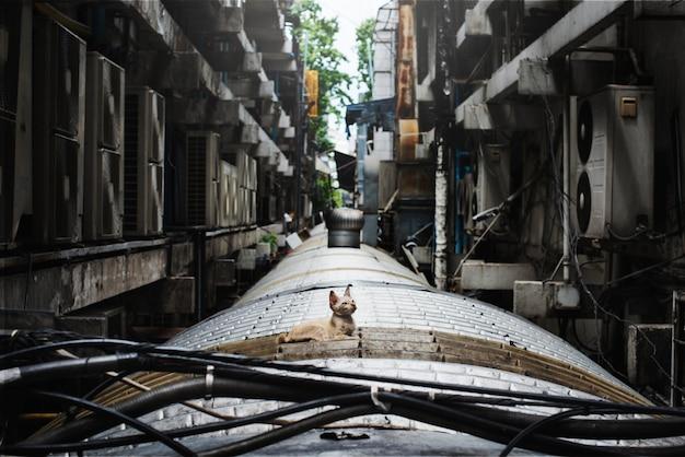 Concetto solitario di cat city senzatetto del bambino