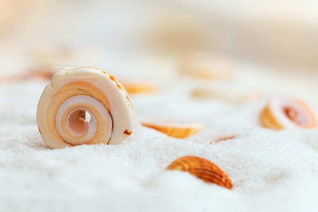 Conchiglia di mare sulla sabbia bianca e fine con uno sfondo sfocato