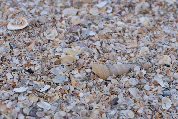 Conchiglia di mare sulla sabbia in spiaggia