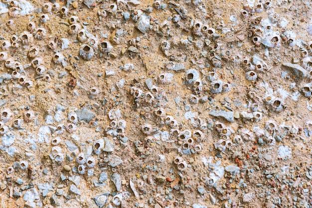 Conchiglie attaccate alle rocce sulla spiaggia