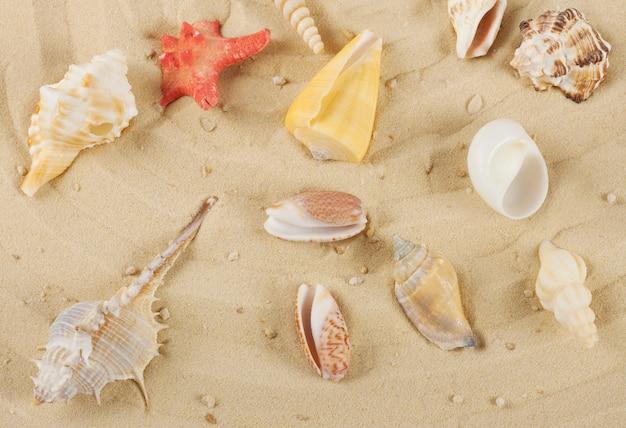 Conchiglie colorate e stelle marine