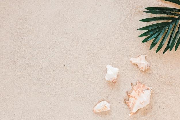 Conchiglie con foglia verde sulla sabbia