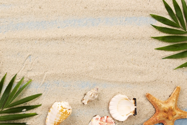Conchiglie copia-spazio e stelle marine in sabbia