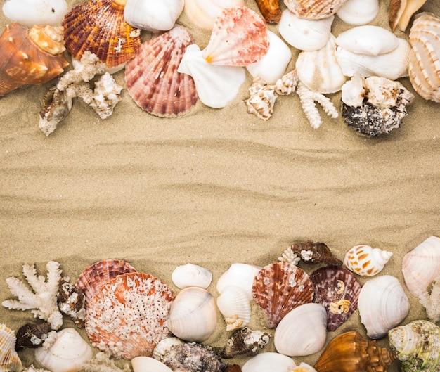 Conchiglie decorativi su sfondo di sabbia