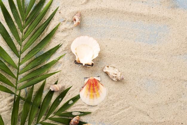 Conchiglie di copia-spazio sulla sabbia