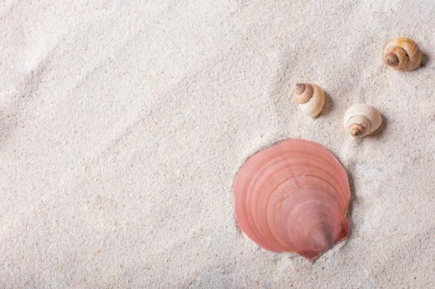 Conchiglie di mare con sabbia come sfondo e copyspace, concetto estivo