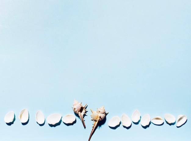 Conchiglie di mare in fila su sfondo colorato