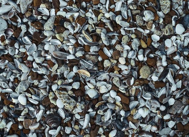 Conchiglie e ciottoli di mare