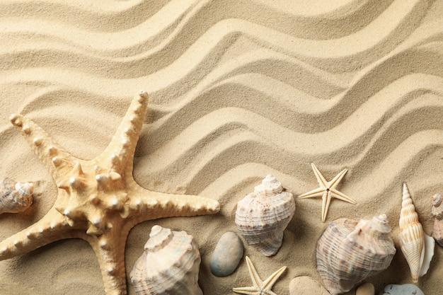 Conchiglie e stelle marine sulla superficie ondulata della sabbia di mare