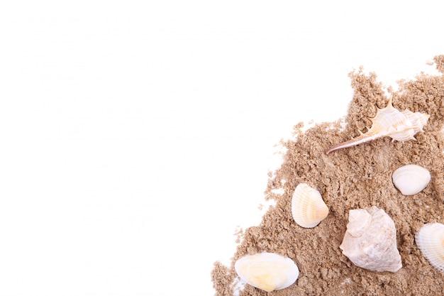 Conchiglie sul mucchio della sabbia isolato sopra bianco