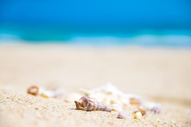 Conchiglie sulla spiaggia di sabbia