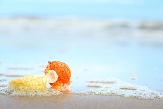 Conchiglie sulla spiaggia tropicale con copia spazio per testo o prodotto.