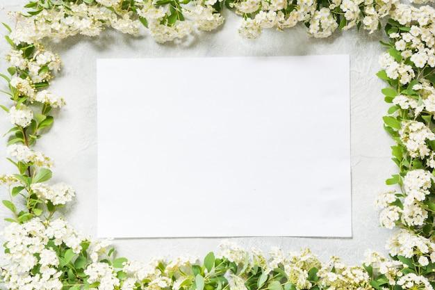 Confine cornice bianca di fiori spirea
