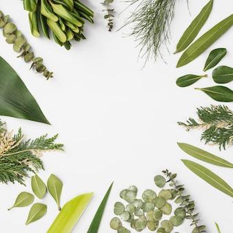Confine da varie foglie di piante