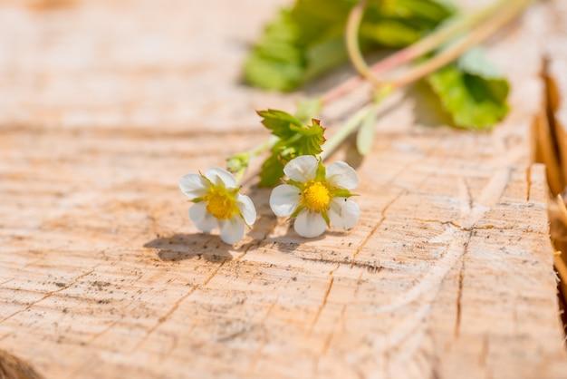 Confine di fragole fresche con crescenti corridori e fiori. su fondo in legno vecchio