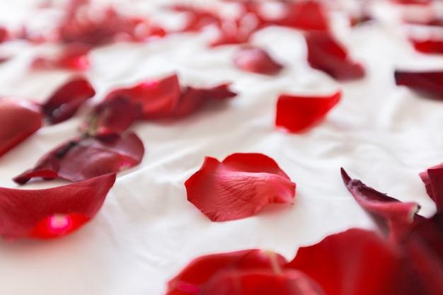 Confine di petali di rosa