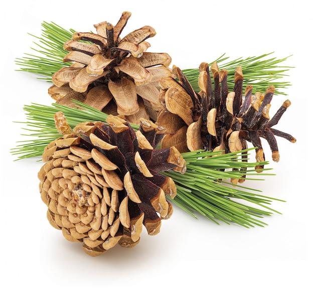 Coni secchi secchi pino di pino selvatico. con foglie verdi isolato isolato